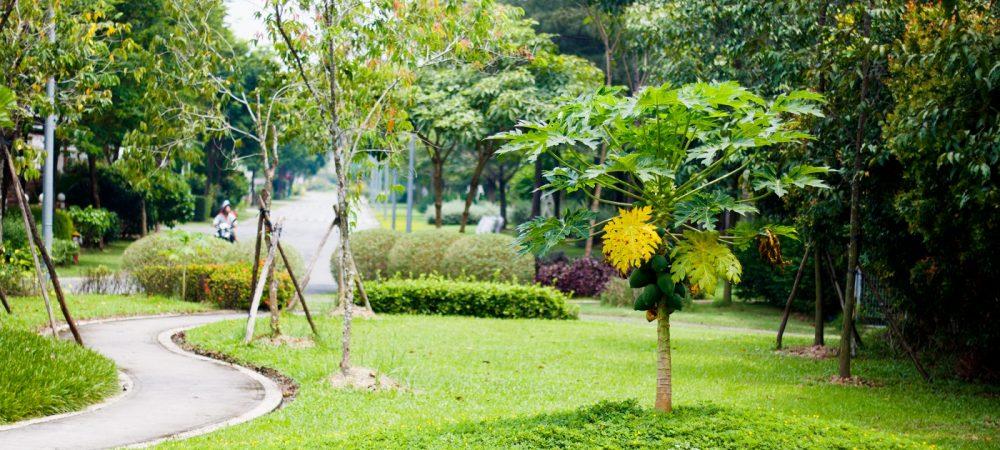 Căn hộ Eco Xuân